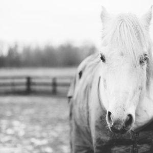 Fluffy the white pony